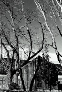 Honorable Mention - B&W - Still Life
