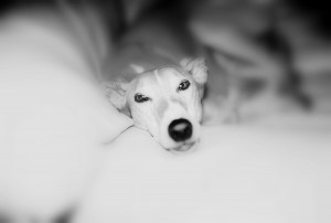 Second Place - B&W -Cats & Dogs-Domestic