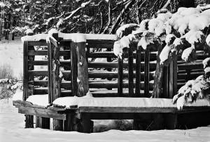 Honorable Mention - B&W - Winter Scene