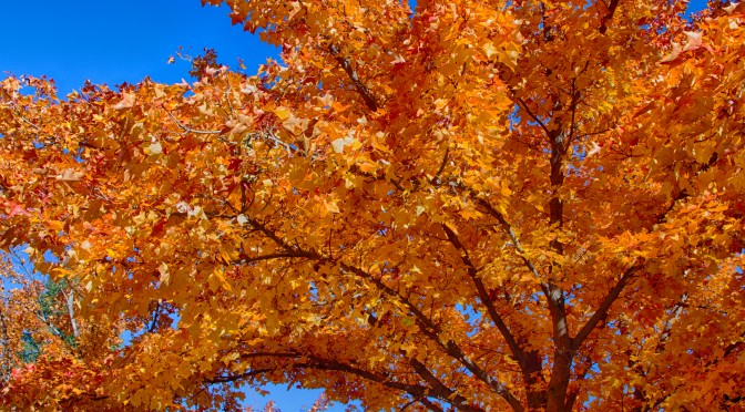 Autumn in Redmond Oregon