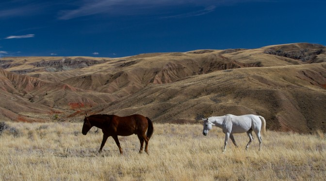 The Horses of Dubois Wyoming