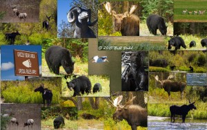2015 BRAVO Tour - Wildlife Collage