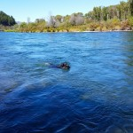 South Fork Snake River 2