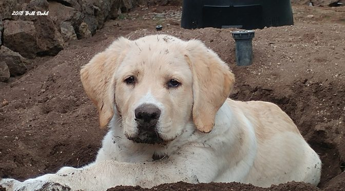 Puppy Playing in Dirt…