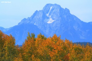 Fall Foliage in The Tetons