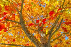 Autumn Images by Bill Dahl