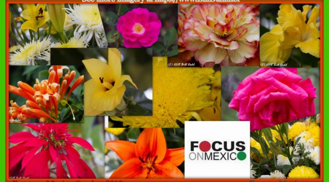 The Flowers and Flora of Ajijic-Chapala