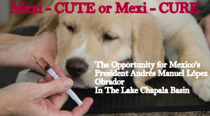 Mexi-CUTE or Mexi-CURE – Lake Chapala Is A Sick Puppy
